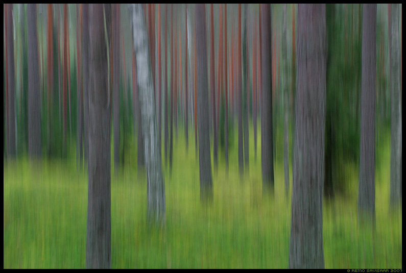 mets, forest, abstract, abstraktne, impressions