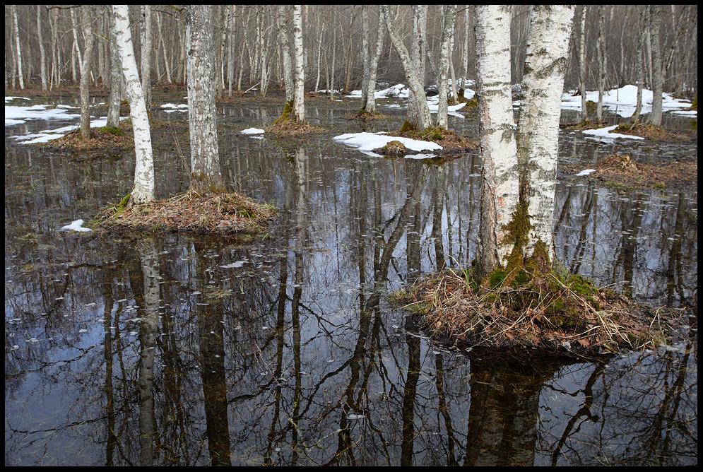 Kevadveed, Spring Waters, kevad, puise, matsalu rahvuspark, puise puisniit, mets, puud, kased, kaasik, märg, sula, sulab