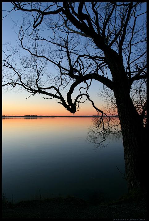 puu, vaikne, õhtu, vaikuses