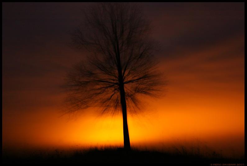 Võlutud, Charmed, puu, tree