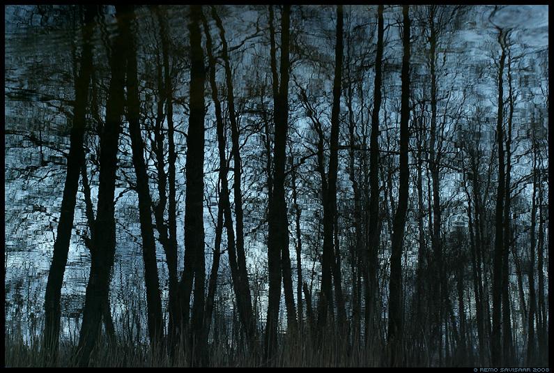 mets, forest, peegeldus, mirror, vesi, water