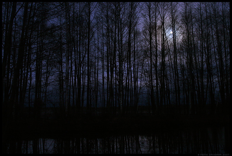 pime, hmar, udne, mets, dark, gloomy, black, forest