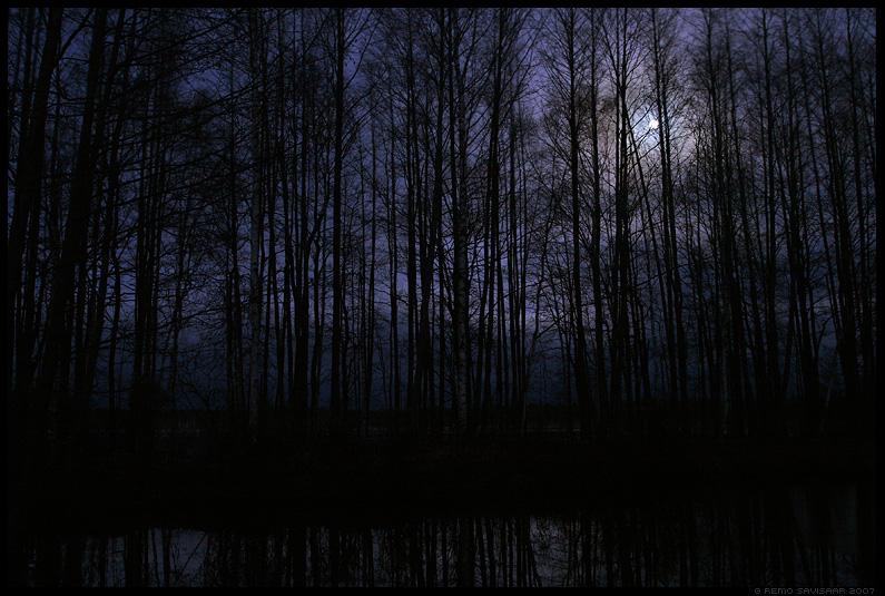 pime, hämar, õudne, mets, dark, gloomy, black, forest
